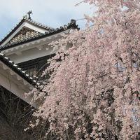 信州 桜の5大名城めぐり