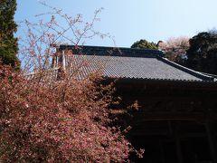 鎌倉妙本寺-2010年春