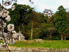 子どもと一緒に愛でる、桜咲く彦根城