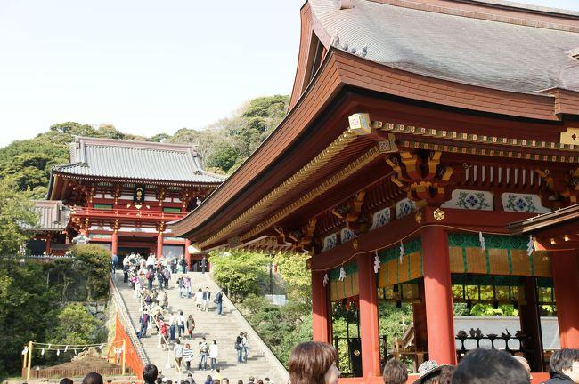 妻が休日出勤のため久々に一人で外出。電車で210円で鎌倉にやってきました。<br />今日は、鎌倉まつり最終日になります。<br />FMヨコハマで得た情報によると、鶴岡八幡神社で流鏑馬神事が<br />行われるようです。<br />先月、倒木したご神木がどうなっているかも気になります。<br /><br />