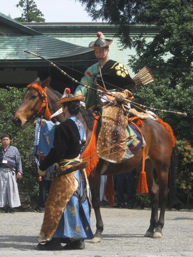 鎌倉の鶴岡八幡宮に流鏑馬神事を見に行きました。<br />200m程度の距離を馬が全力疾走し、かつ、矢が放たれるのには凄さを感じます。<br />また、倒れた大銀杏に復活の兆しが。