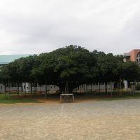 2010年4月鹿児島離島制覇のたび第二弾 その1 奄美大島&沖永良部島