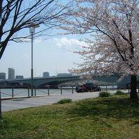 春の新潟市を歩く! (東から西へ)