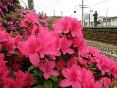 JR豊浜駅の躑躅