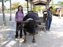 ANAインターコンチネンタル石垣リゾートに泊まるデラックス八重山周遊モニターツアー 2010