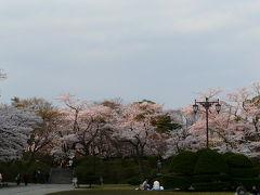 千秋公園で花見