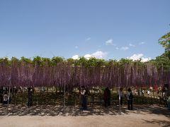 美の饗宴  足利フラワーパーク の花達 (上)
