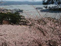 満開の桜松島一の坊