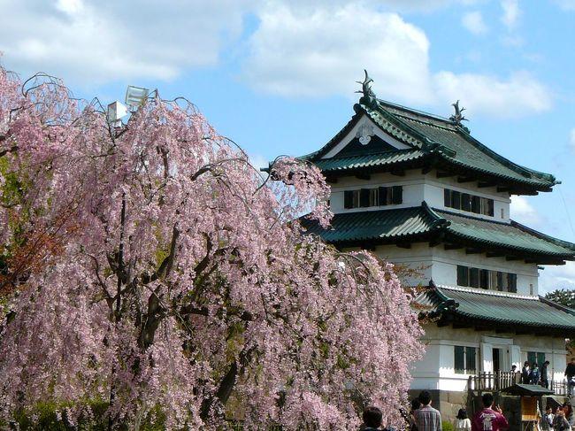 GWは仙台市内で過ごしたわけだが、天の邪鬼な私達は5/8〜9日で桜が有名な弘前市へ行く事にした。<br />桜祭りも5/5までで終わった事だし(笑)<br />でも今年の桜の開花は仙台でも一週間ぐらいは遅れている気がしたので弘前も!と淡い期待を抱いて快晴の仙台を朝出発。<br />昼食は大館市で本場の「きりたんぽ鍋」を堪能。→(一日目大館編)<br /><br />次の目的地「弘前公園」に向かう。<br />そしてもう一つの目的は「洋館とフランス料理の街」という弘前でフレンチディナーを堪能する事だ。<br /><br />★主な撮影ポイント<br />1.弘前公園(桜・天守・岩木山)<br />2.フレンチレストラン「シェ・アンジュ」