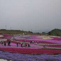 茶臼山「天空の花回廊」芝桜の丘へ