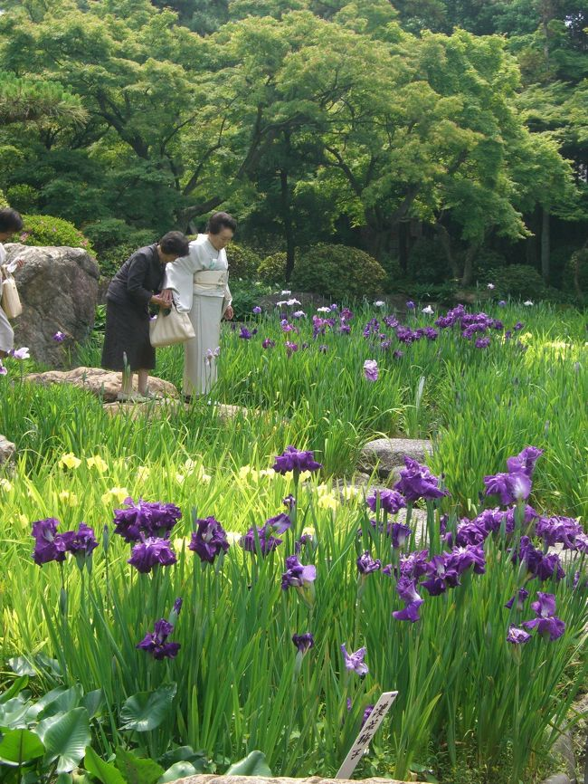以前から気になっていて行きたかった六華苑と諸戸氏庭園へ行って来ました。<br /><br />ちょうど菖蒲が見頃を迎えて最高!