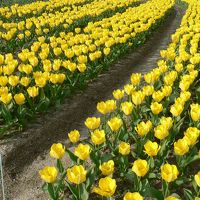 日本の旅 関西を歩く 大阪、万博記念公園のEXPO'70パビリオン・日本庭園周辺