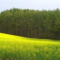 ぶら〜り♪ 春の信濃路(大町市/鷹狩山からの白馬連峰眺望)