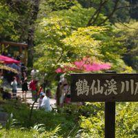 金沢・加賀のおいしいものを食べる旅(5)~新緑の鶴仙渓と山中温泉