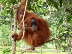 インドネシア周遊 その1:スマトラ島