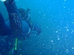 【海ん中にお出掛け】blank diverのrehabilitation〈井田〉