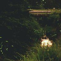 小さな旅●愛知岡崎・鳥川ホタルの里 飛び交うゲンジボタル