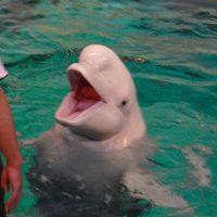 名古屋港水族館でまんぞくかんを得るために