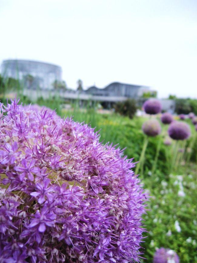 「千葉市花の美術館」は「花のある暮らし・花いっぱいのまちづくり」を発信する施設として、平成8年4月にopen。<br />今年で15年目を迎えるそうです。<br />友達に誘われて初めて訪れた「花の美術館」は、思っていた以上の施設であり、美術館ということもあって花にまつわる展示室・ギャラリー等などありました。<br /><br />入館料は200円という低料金には驚きました!<br />1年を通してイベントや花を楽しめ、家族で何度も訪れる事ができる施設であると思います。
