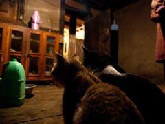 2010GW 旅行 ブータン:プナカ編
