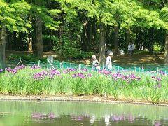 海浜 霞公園の花ショウブ