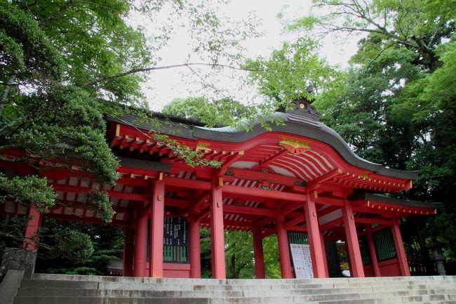 2010年6月26日 香取神宮の森へ清涼を求めて。