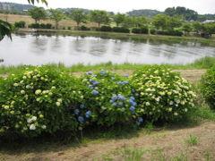 多古あじさい公園から日本寺(にちほんじ)をめぐる1 あじさい公園