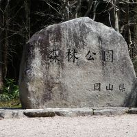 春の森林公園(2010)