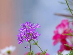 花フェスタ記念公園ぶらり散策