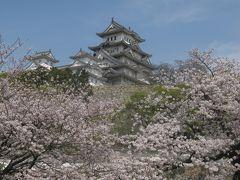 姫路城の桜 西ノ丸