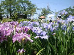 6月は菖蒲園へ・・・豊橋、賀茂菖蒲園