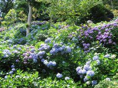 紫陽花を見に鎌倉へ