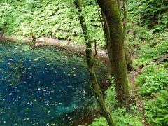 秋田散歩 3 白神山地 神秘の青池へ