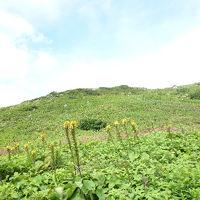 伊吹山の花畑を歩く