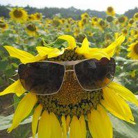 広島/花いっぱいの世羅高原♪100万本のひまわりまつり&ダリア