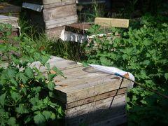定光寺・瀬戸の旅4  目の前にハチがいる丹羽養蜂場(日曜日だけ公開)