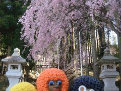みすたぁのお花見 in 春日神社&虚空蔵様(満願寺)