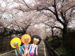 みすたぁのお花見 in 岳温泉①