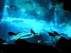 【☆ダイビング☆セノーテ編】初めてのカリブ海♪200匹のジンベェとカリビアンブルーの海に出会う旅