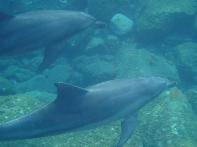 昔から念願だった野生のイルカと泳ぎに御蔵島に行って来ました。<br /><br />海の中でイルカの泳ぐ姿はかなりの感動ものでした!<br />