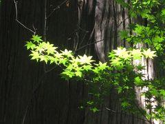 十和田湖神社・・・パワースポット・・ ★めずらしく美味しい旅★ 今年3度目JTB旅物語・・