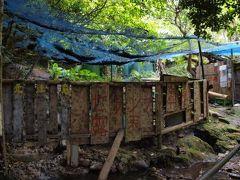 野生牛と秘湯めぐり ◆トカラ列島・口之島