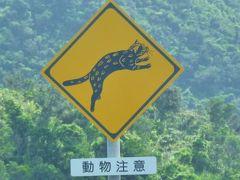 台風来ないかドキドキの八重山へ(5)