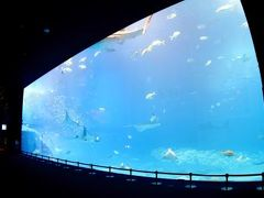 Birthdayに(誰もいない)美ら海水族館を満喫したです!