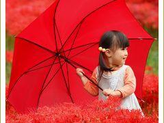 Solitary Journey[793]曼珠沙華の絨毯、真っ赤な彼岸花畑で出会ったかわいいお嬢さん♪<吉舎町ヒガンバナ群生地>広島県三次市