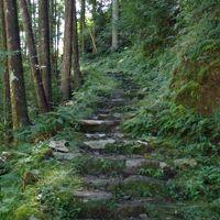 王子の「街道てくてく旅」熊野古道、大雲取越で超自然を体感。