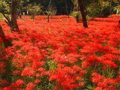 2010 秋の真っ赤な絨毯~広島県・吉舎町のヒガンバナ~