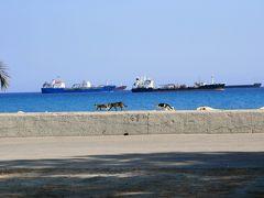 地中海猫探しの旅◎リマソール2日目つづき 遺跡とかやっぱり猫とか◎