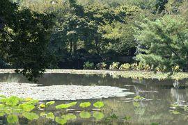 2010秋、石庭の龍安寺(3):10月1日(3):日本最古の侘助椿、梵鐘、仏座像、錦鯉、野鯉、ススキ、苔庭