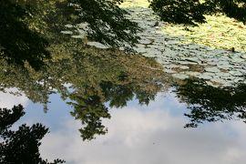 2010秋、石庭の龍安寺(5:完):10月1日(5):西源院、大珠院、鏡容池、萩、睡蓮、蓮、弁天島、伏虎島